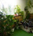 Зелен кът от интериора на детската градина